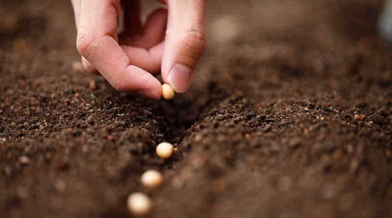 Внимание: Вырвите эти семена или пожнете плоды поражения