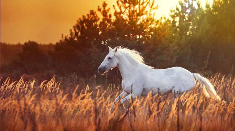 Фермер, сын и лошадь (притча)