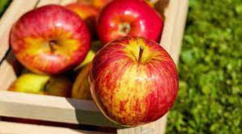 Какая польза от ежедневного употребления яблок?
